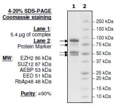 EZH2/EED/SUZ12/RbAp48/AEBP2 wild-type active Complex Human, recombinant (cat. nr 51004, BPS tebu-bio)