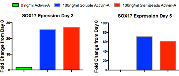 Sox17 expression with StemBeads Activin A tebu-bio