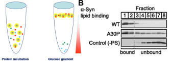Floatation assays -  for higher specific protein-lipid interactions