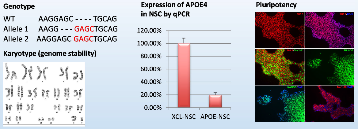 Knock‐out line for APOE4, a gene associated with Alzheimer's disease