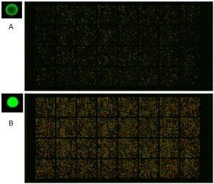 Microarrays signal enhancement