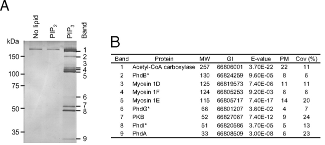 Pull-down assays - discovery of protein partners to a known lipid Echelon tebu-bio