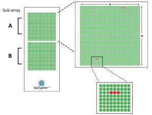 EpiTitan™ Histone Peptide Array layout.