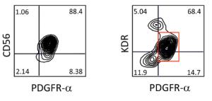 Flow cytometric analysis of CD56 vs. PdgfR-