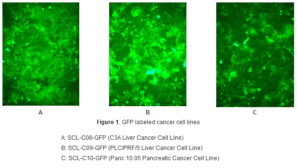 Premade cell lines Genecopoeia & tebu-bio