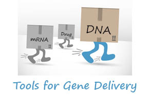 Tools for Gene Delivery viral systems to VIPs and BCPs strategies by tebu-bio