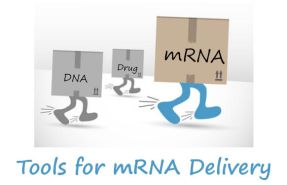 Tools for mRNA delivery at tebu-bio