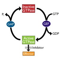 small-g-protein-inactivation