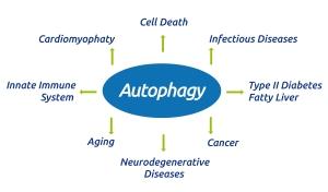 Autophagy-01