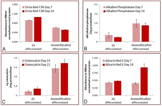Figure 2: Cell growth on Alvetex®Scaffold enhances osteogenic differentiation of rat MSCS compared to conventional 2D culture. Data plots show: (A) Sirius Red F3B staining for collagen. Bars represent ratio between average absorbance at 490 nm and average total protein content as determined by Bradford assay, n=3, ±SEM; (B) Alkaline phosphatase activity as assayed by dephosphorylation of p-nitrophenyl phosphate substrate and normalised to average total protein content as determined by Bradford assay. Bars represent average nmol of alkaline phosphatase per mg of total protein per hour. n=3, ±SEM; (C) ELISA detection for osteocalcin released into conditioned medium. Data normalised to average total protein content as determined by Bradford assay. Bars represent average ng of osteocalcin per mg of total protein per hour. n=3, ±SEM; (D) Alizarin Red S staining for calcium. Bars represent ratio between average absorbance at 490 nm and average total protein content as determined by Bradford assay, n=3, ±SEM.