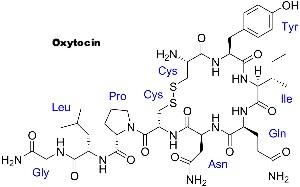 Oxytocin peptide structure