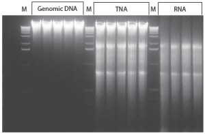 DNA RNA or Both