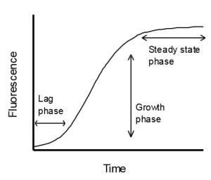 Actin polymersization - phases