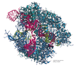 CRISPR Cas9 genome editing complex.