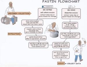 Fastin flowchart