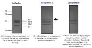 Rec. nucl. protein level - competition comparison