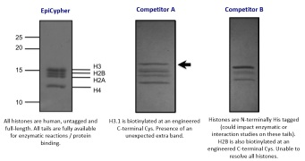 Rec. nucl. protein level - competition comparison