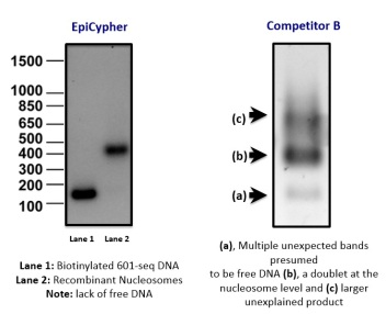 Recombinant Nucl comparison - absence of free DNA
