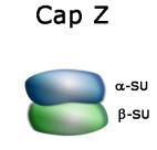 tebu-bio rec. Cap Z Actin Binding Protein representation