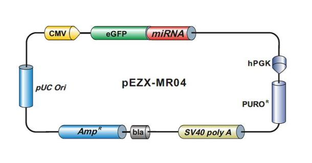 pEZX-MR04