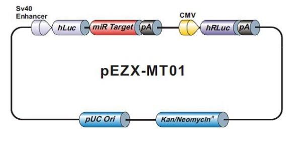 pEZX-MT01