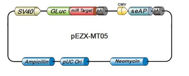 pEZX-MT05