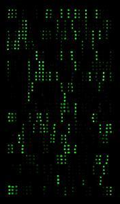 L-Series: Label-Based Semi-Quantitative Glass Slide and Membrane Arrays Raybiotech tebu-bio