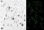 L Series membrane & chip