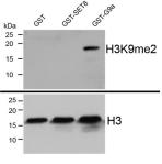 Methylation Assay Data tebu-bio EpiCypher