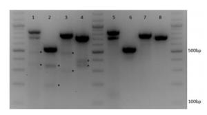 CRISPR-Cas9 multiplexing to multiple targets