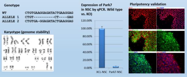 XCell PARK7 KO iPS cell line by tebu-bio