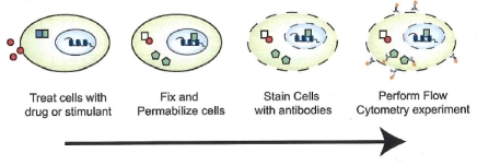 Intracellular Staining for Flow Cytometry
