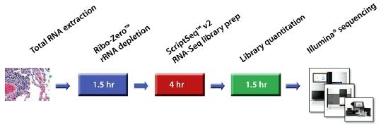 ScriptSeqComplete Process by Epicentre-Illunmina tebu-bio illustration