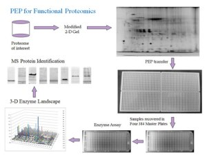 Array Bridge PEP for Functional Proteomics at tebu-bio