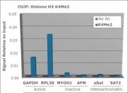 600-401-I58-HistoneH3K4me3-Antibody-3-ChIP-4x3