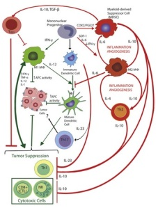 Immunosurveillance: Crosstalk between cancer and immune cells