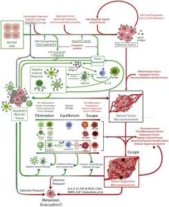 A Model of Immunoediting in Tumour Progression - Crosstalk between cancer and immune cells: tumor escape