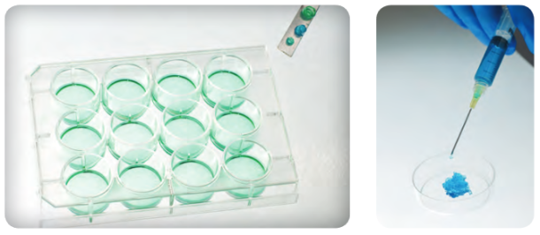 HyStem hydrogels provide a flexible format for translational research. They can be used to culture cells in a 2D environment on cell culture plates, to encapsulate cells in a 3D ECM in vitro.