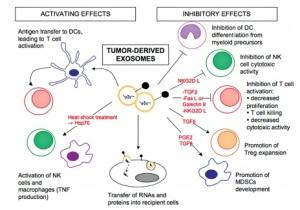 TME-exosomes