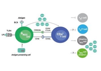CD40 figure